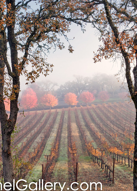 Clearing Fog Wine Country
