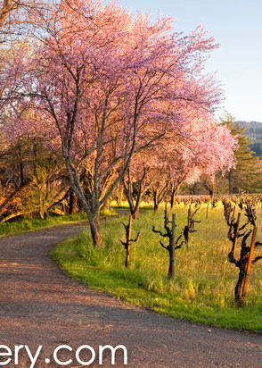 Country Lane Calistoga