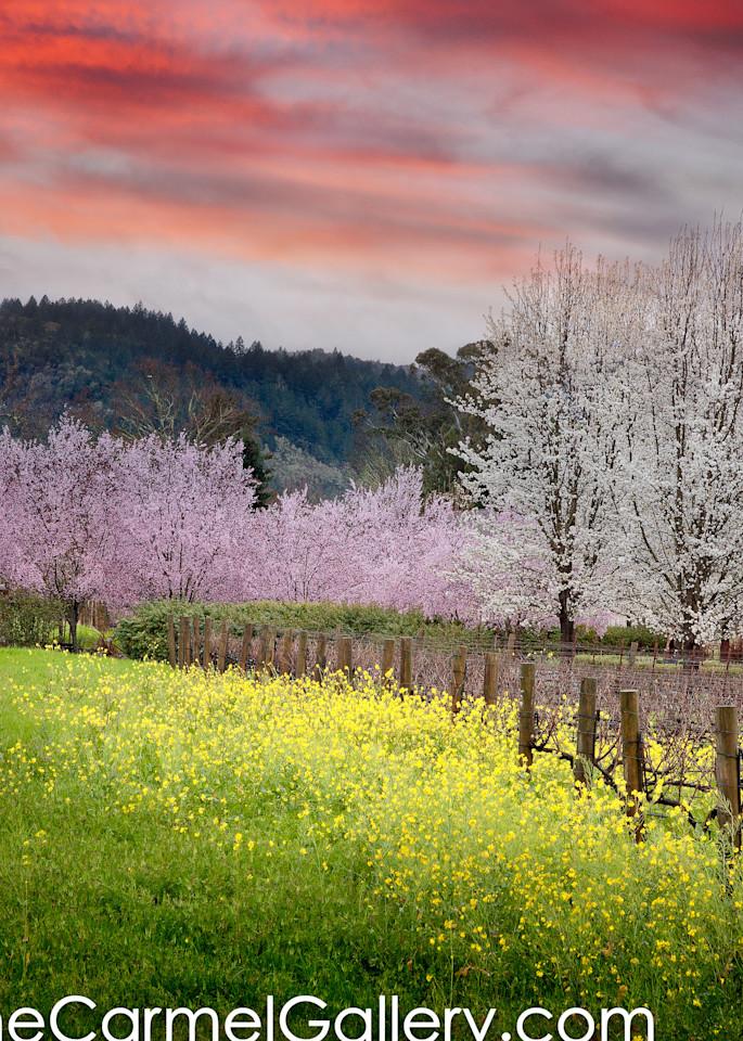 Winter Bloom Calistoga
