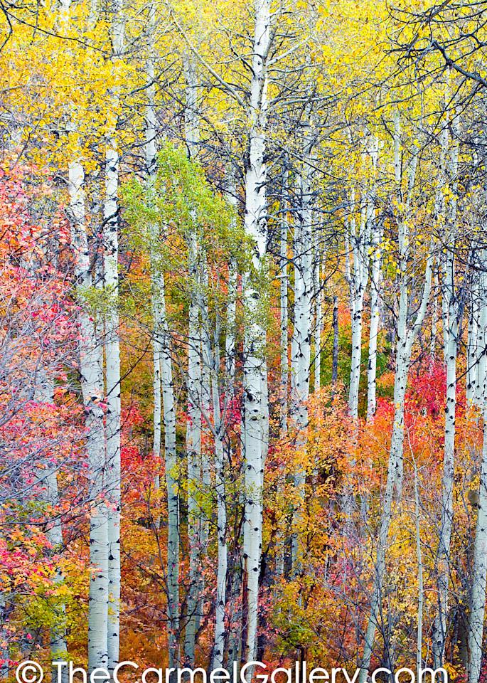 Autumn Tapestry V