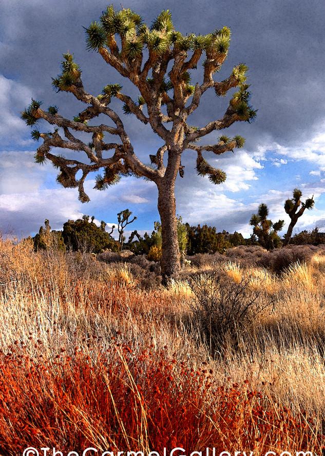 Joshua Tree Art   The Carmel Gallery