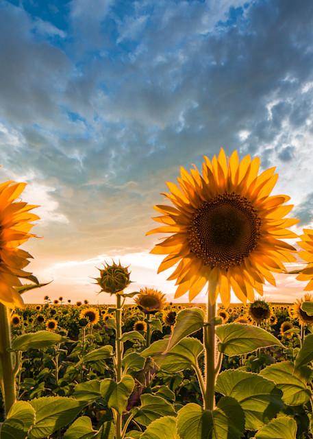 Sun Bathers Photography Art | Jon Blake Photography