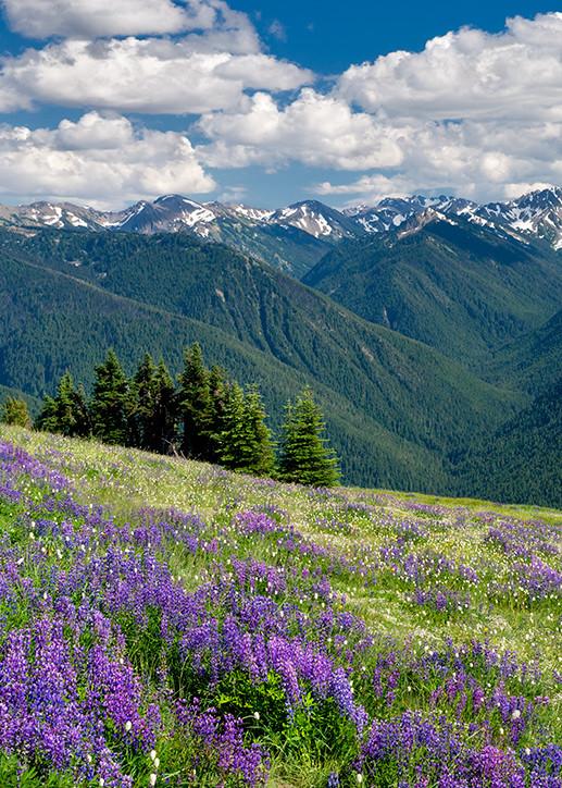 Mountain Wildflowers  Art   Fine Art New Mexico