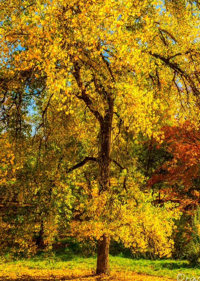 Autumn Gold Art | Ray Masters Productions
