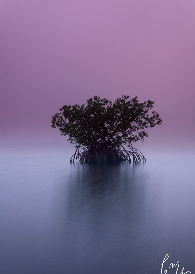 Surreal Mangrove Photography Art   Constance Mier Photography
