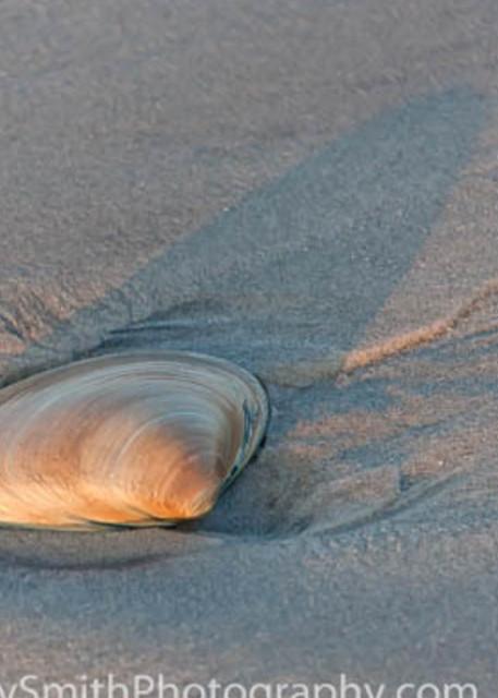 shell at sunset fine art photograph