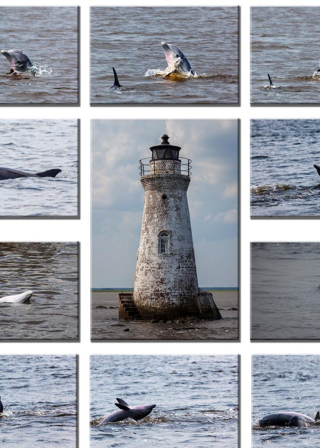 Dolphins around Cockspur Lighthouse