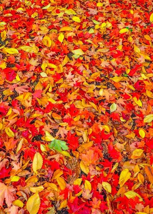 Autumn Carpet Art | Ray Masters Productions