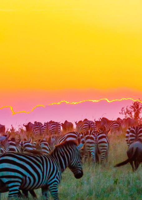 Zebras 010 Photography Art | Cheng Yan Studio
