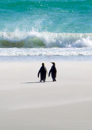 Penguins 002 Photography Art | Cheng Yan Studio