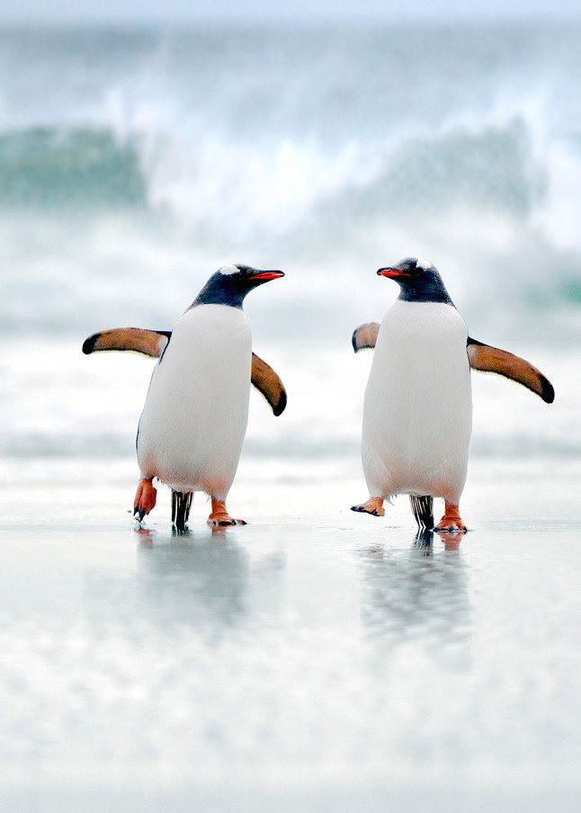 Penguins 005 Photography Art   Cheng Yan Studio