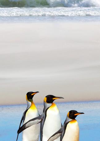Penguins 011 Photography Art | Cheng Yan Studio