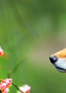 Foxes 001 Photography Art | Cheng Yan Studio