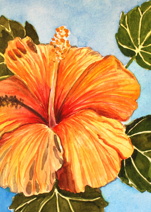 Orange Hibiscus Flower Art for Sale