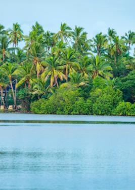 Fiji Palms Panoramic print by Brad Scott