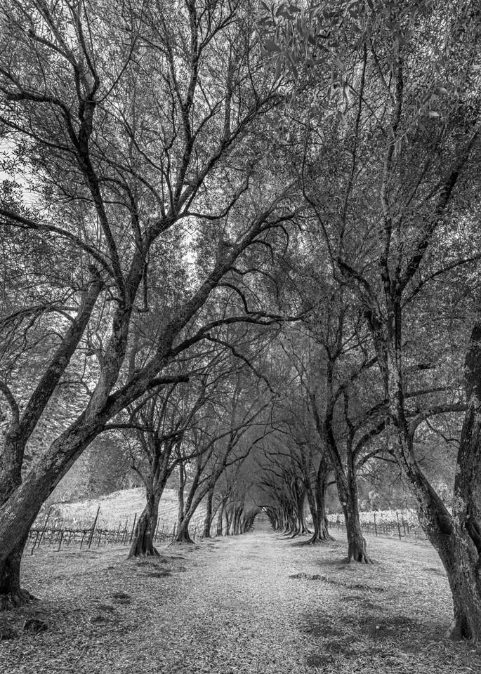 Ancient Grove I