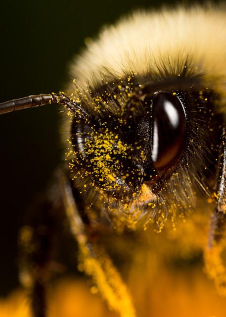 Bumble bee #1