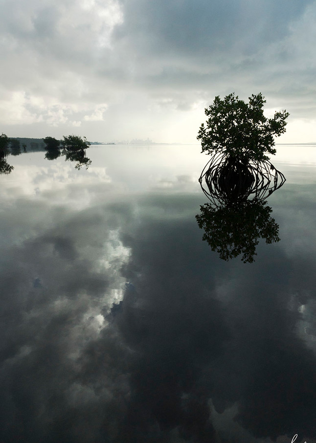 Constance Mier Photography from a Canoe - mangrove waterscapes