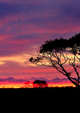 """Serengeti Sunset"" - Nantucket landscape panorama photograph"