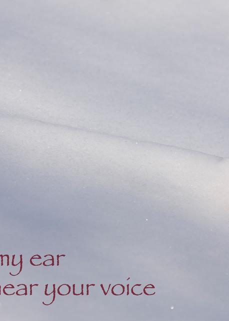 Blown snow and oak leaf photograph for sale as Fine Art.