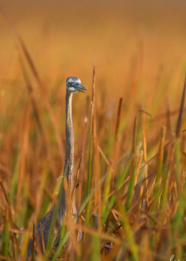 Constance Mier Photography - birds of Florida