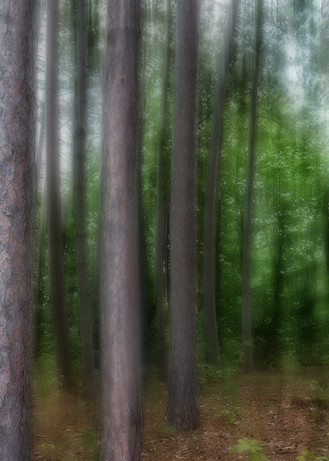 Pine Pan Blur