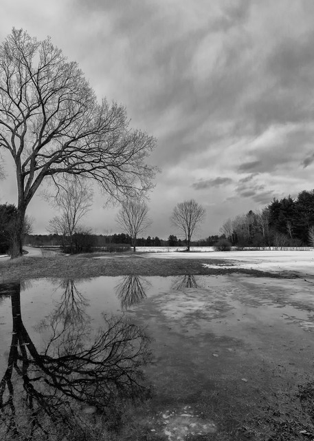 Winter's End, black and white, trees and sky
