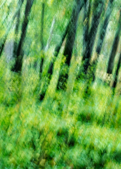 Forest in Summer Abstract