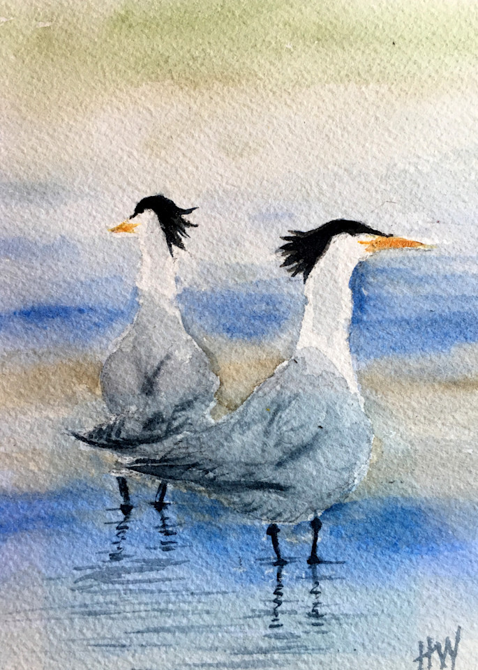 Terns painting by Holly Whiting