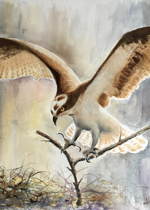 Nesting, watercolor painting by Holly Whiting