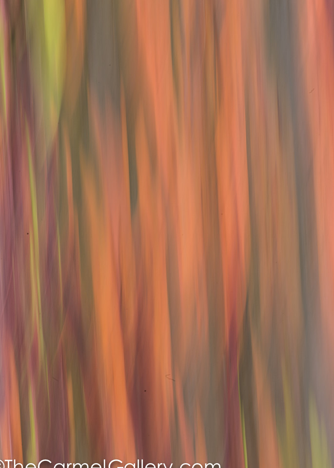 rainbow eucalyptus camera  painting
