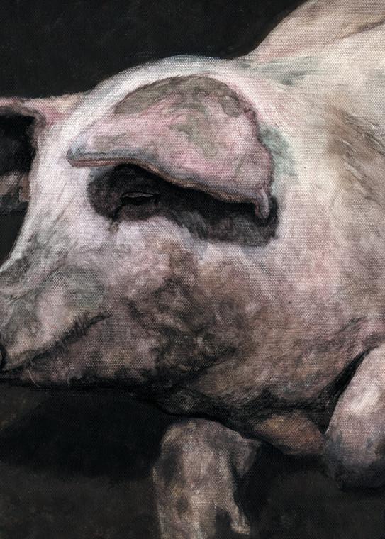 Pig Loving The Mud Art | Blissful Bonita Art Studio & Gallery