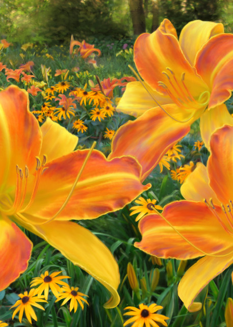 Frans Hals Daylilies and Rudbeckia, wall art. A print of an original painting by the artist, Mary Ahern.