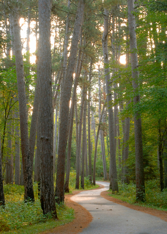 Wilderness Drive in Itasca State Park