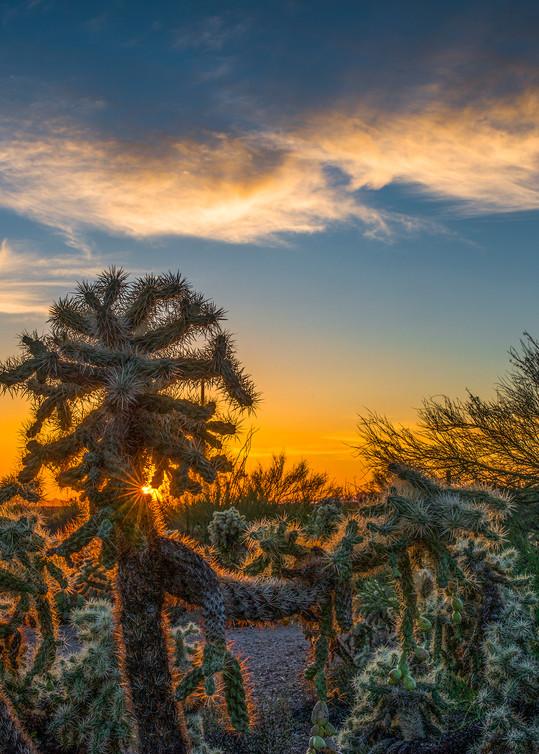 Cholla Sunset
