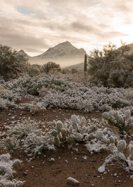 arizona, tucson, snow, winter, tucson mountain park