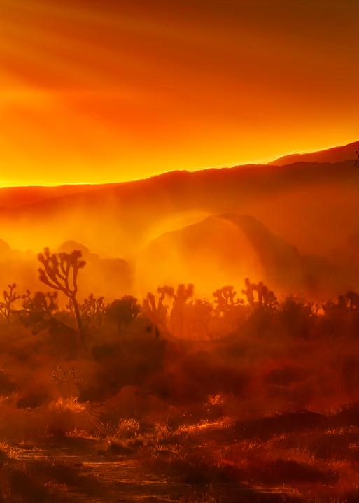 Joshua Tree Sunset Cactus Sun Rays