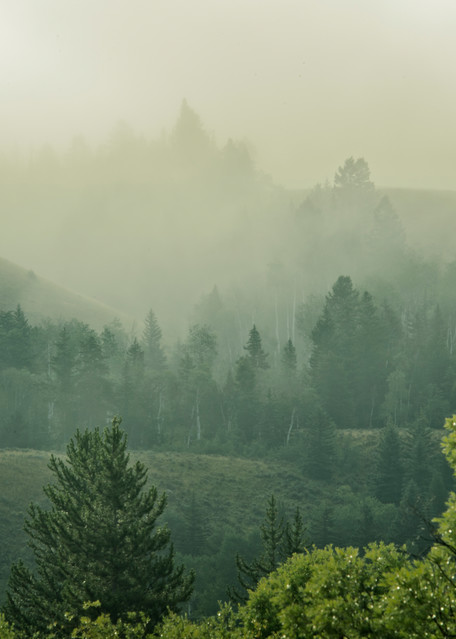 Layered Fog Photography Art | Images2Impact