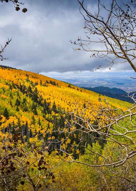 Photography, aspens, fall, autumn, southwest, new mexico, landscape, sangre de christo mountains
