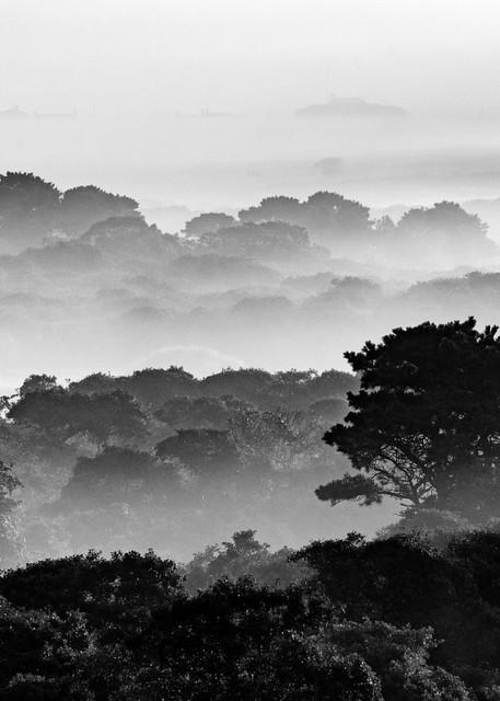 """Middle Moors Foggy Sunrise - BW"" Black and White Nantucket 