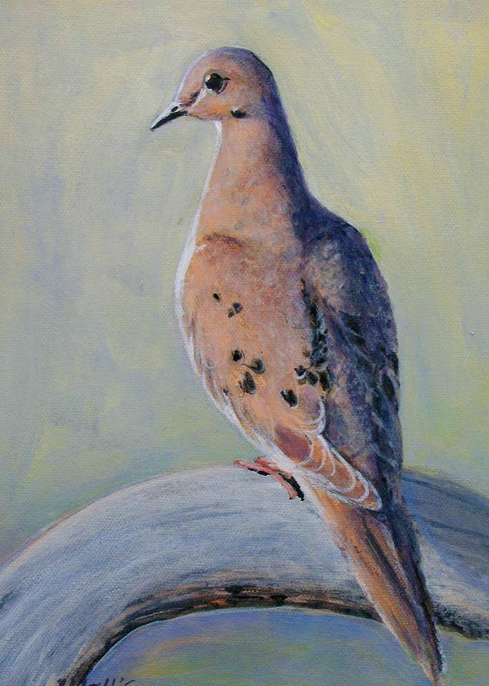 Mourning Dove Aa Art   Charles Wallis