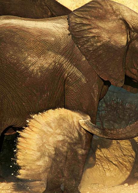Dust Bath 2 Photography Art | Images2Impact