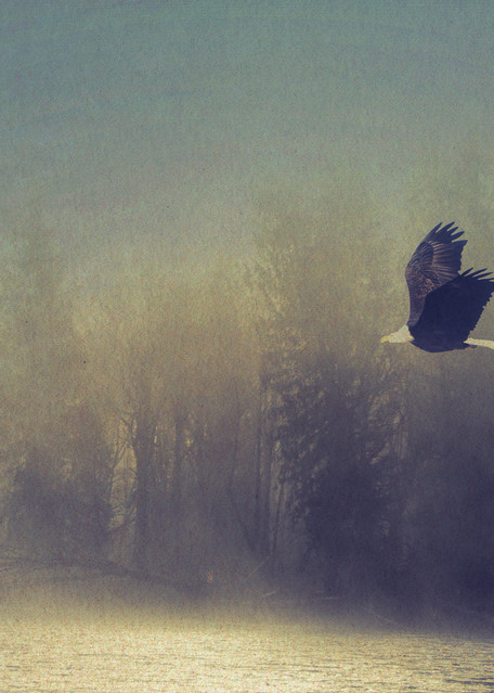 Flight In Fog Photography Art | Images2Impact