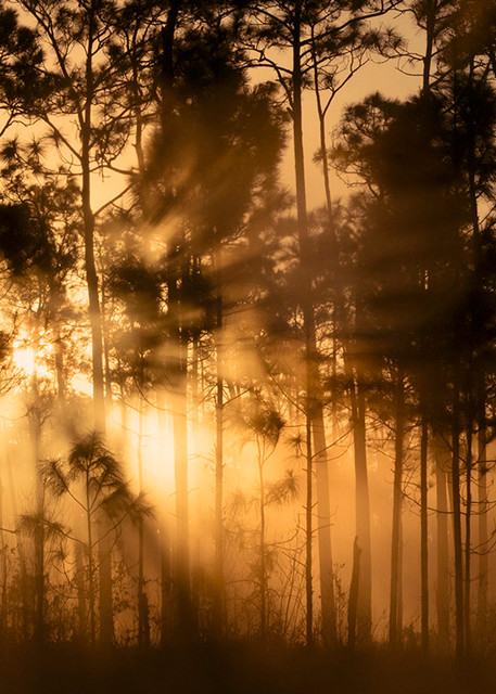 Constance Mier Photography - landscapes of the Everglades