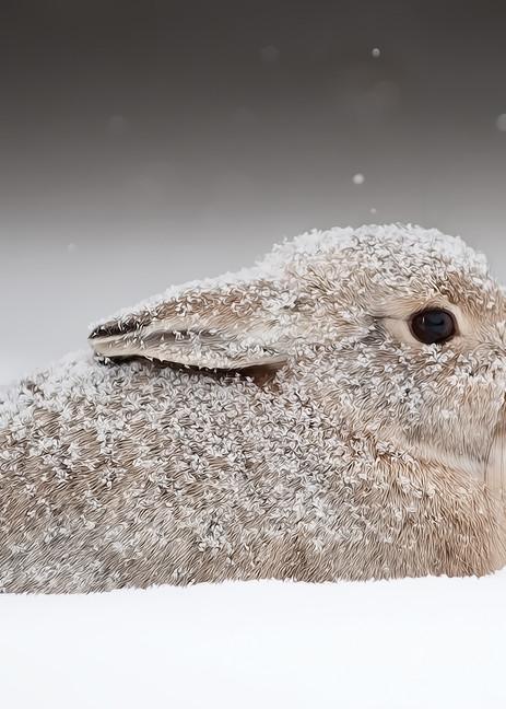 Snow Bunny Photography Art | Craig Edwards Fine Art Images