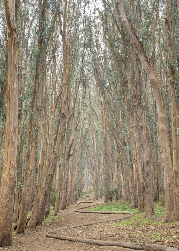 The Woodline Ii Art | The Carmel Gallery