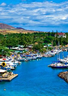 Tranquil Harbor Panorama