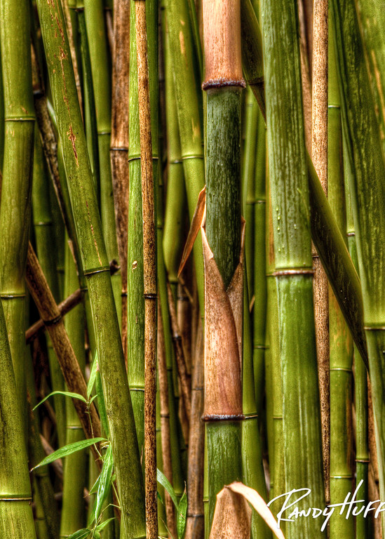 Rainforest Bamboo