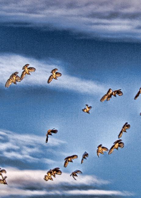 Freefall Photography Art | Craig Edwards Fine Art Images