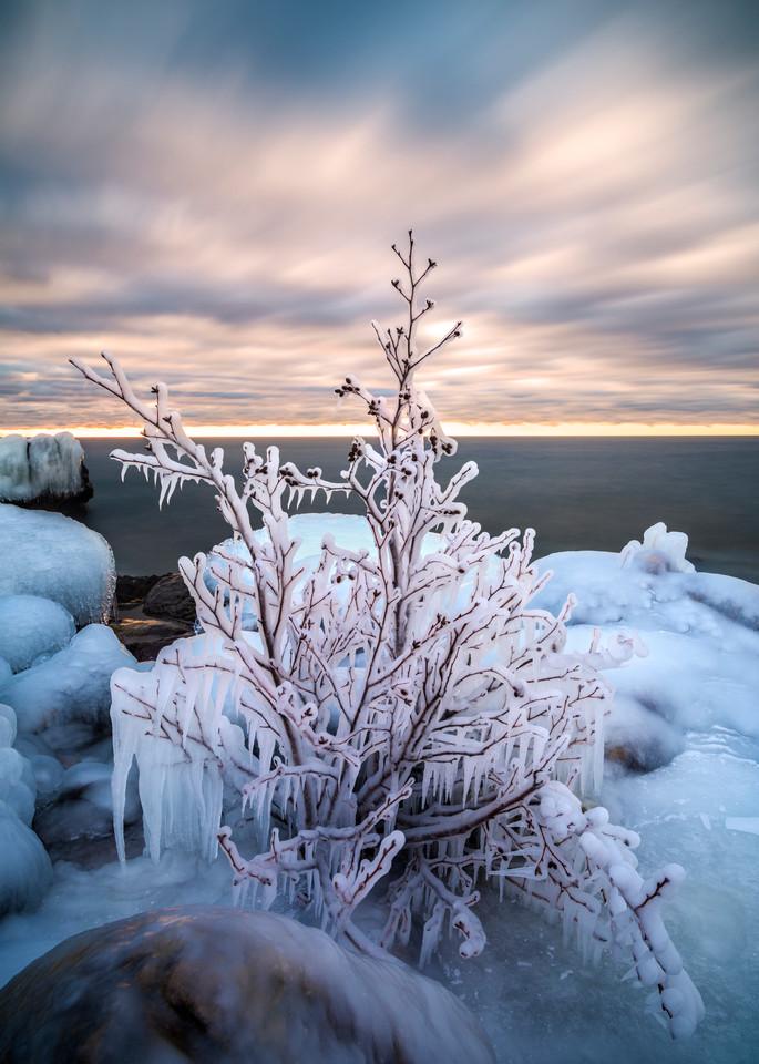Ice-coated tree along Lake Superior